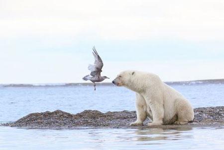 عکسهای جالب,عکسهای جذاب, مرغ دریایی