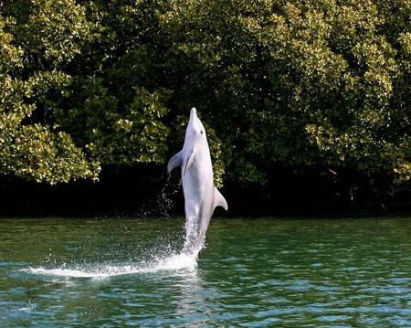 عکسهای جالب,عکسهای جذاب,دلفین