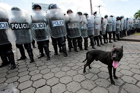 عکسهای جالب,عکسهای جذاب,سگ از نژاد پیت بول