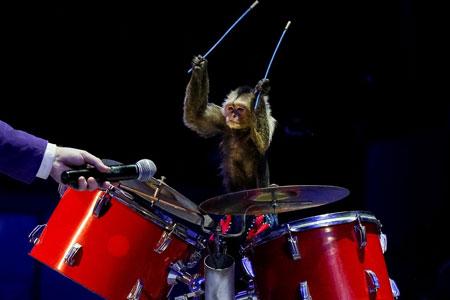 عکسهای جالب,عکسهای جذاب, میمون طبل نواز