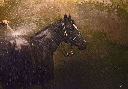 عکسهای جالب,عکسهای جذاب,شست و شوی یک اسب