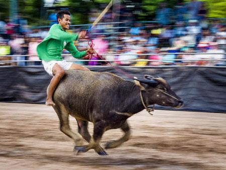 عکسهای جالب,عکسهای جذاب,مسابقات گاورانی
