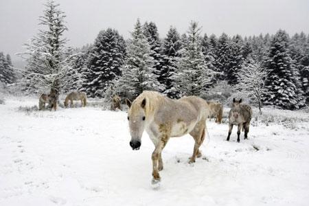 عکسهای جالب,عکسهای جذاب ,اسب ها
