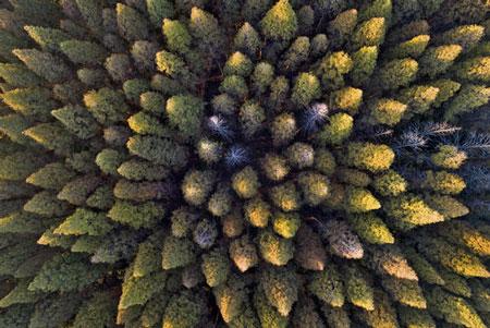 عکسهای جالب,عکسهای جذاب , جنگل
