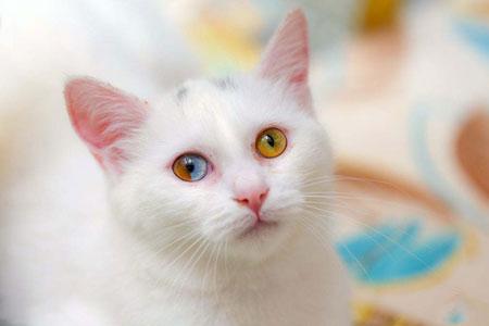عکسهای جالب,عکسهای جذاب, گربه