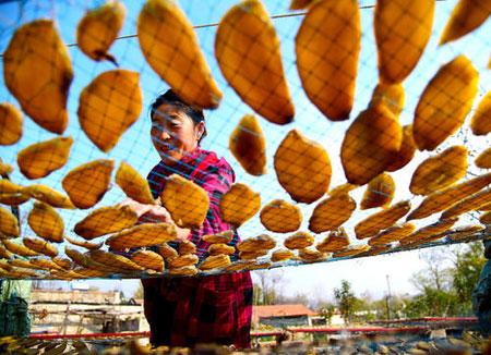 عکسهای جالب,عکسهای جذاب, خشک کردن بریدههای سیبزمینی