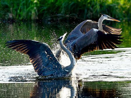 عکسهای جالب,عکسهای جذاب, پرنده ها