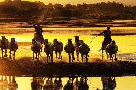 عکسهای جالب,عکسهای جذاب,اسب وحشی