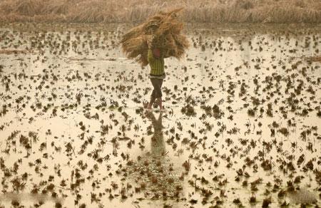 عکسهای جالب,عکسهای جذاب,کشاورز کشمیری