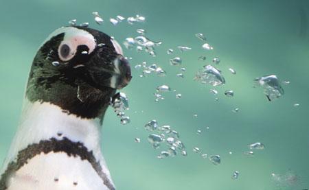 عکسهای جالب,عکسهای جذاب ,پنگوئن