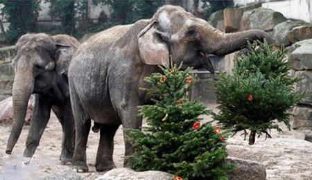 عکسهای جالب,عکسهای جذاب,فیل ها