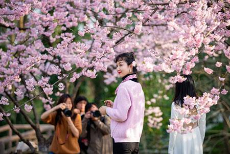 عکسهای جالب,عکسهای جذاب,شکوفههای گیلاس