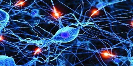 اخبار پزشکی ,خبرهای پزشکی,سلولهای مغزی