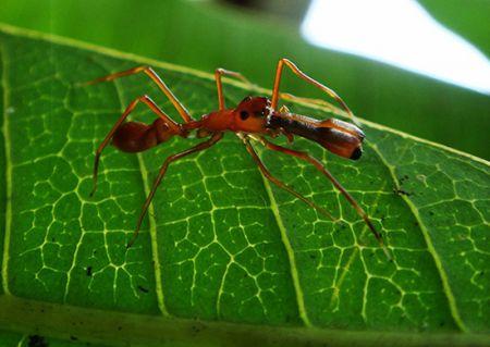 اخبار,اخبار گوناگون,عجیب و غریبترین عنکبوتهای دنیا