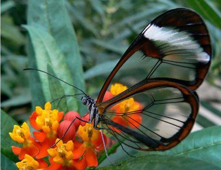 اخبار,اخبار گوناگون,حیوانات شفافی که ثابت میکنند این سیاره یک معجزه است