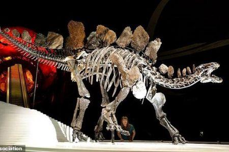 اخبار,اخبار علمی,کشف گونه عجیب از قدیمی ترین یک نوع دایناسور