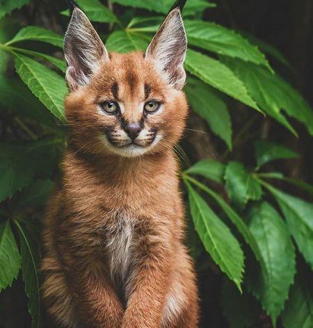 اخبار,اخبار گوناگون,حیوانات