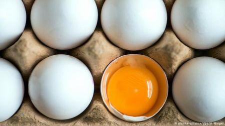 اخبار پزشکی ,خبرهای پزشکی,تخممرغ
