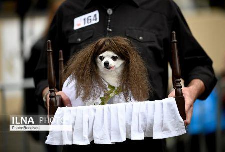 اخباݛ,اخباݛ گوناگون,ݛژه سگهای هالووین دݛ نیویوݛک