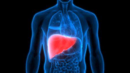 اخبار,اخبارگوناگون,حقایقی جالب و شگفتانگیز درباره بدن شما