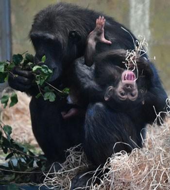 عکسهاي جالب,عکسهاي جذاب, باغ وحش