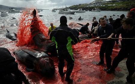 عکسهای جالب,عکسهای جذاب,نهنگ