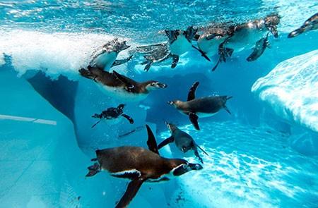عکسهای جالب,عکسهای جذاب ,پنگوئن ها