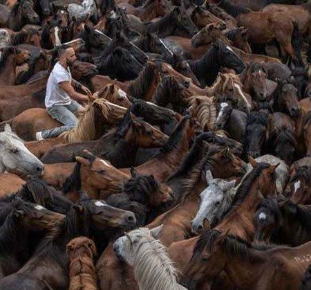 عکسهای جالب,عکسهای جذاب, اسب وحشی