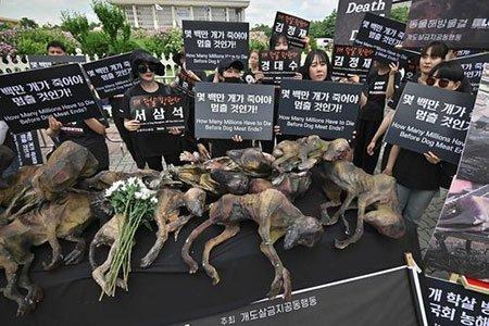 عکسهای جالب,عکسهای جذاب, فعالان حقوق حیوانات