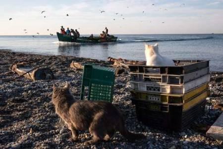عکسهای جالب,عکسهای جذاب, گربهها