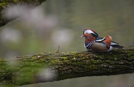 عکسهای جالب,عکسهای جذاب,اردک