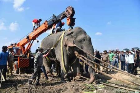 عکسهای جالب,عکسهای جذاب,فیل وحشی