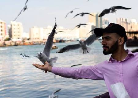 عکسهای جالب,عکسهای جذاب, مرغان دریایی
