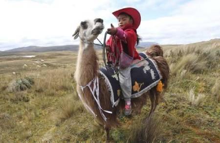 عکسهای جالب,عکسهای جذاب,لاما
