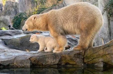 عکسهای جالب,عکسهای جذاب, توله خرس قطبی