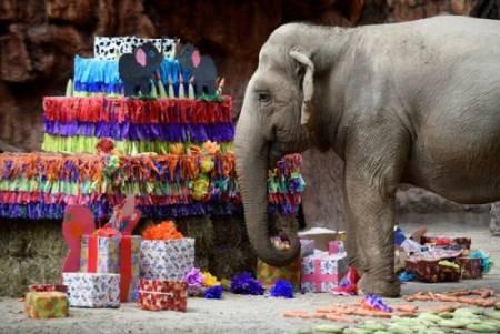 عکسهای جالب,عکسهای جذاب, جشن تولد