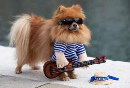 عکسهای جالب,عکسهای جذاب,سگ خانگی