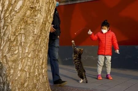 عکسهای جالب,عکسهای جذاب,بازی با گربه