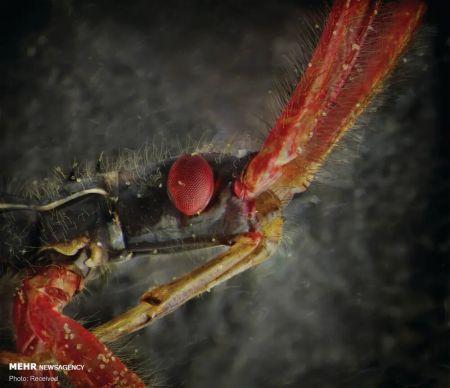 اخبار,اخبار گوناگون,پرتره حشرات از نمای نزدیک