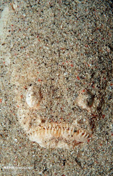 اخبار,اخبار گوناگون,استتارهای جالب دنیای زیر آب