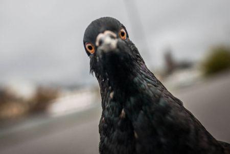 اخبار,اخبار گوناگون,شباهتهای جالب حیوانات به انسان