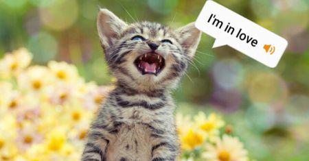 اخبار,اخبار تکنولوژی,برنامه ترجمه صدای گربه