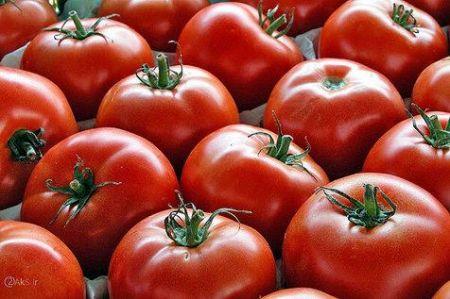 اخباراقتصادی ,خبرهای اقتصادی, قیمت گوجه فرنگی