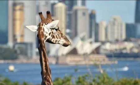 عکسهای جالب,عکسهای جذاب, باغ وحش