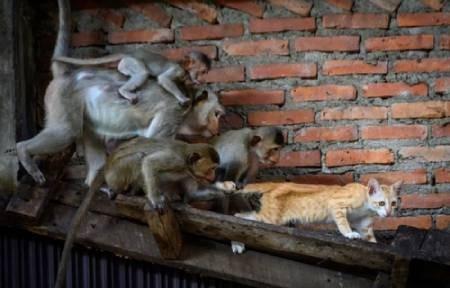 عکسهای جالب,عکسهای جذاب, حمله میمونها