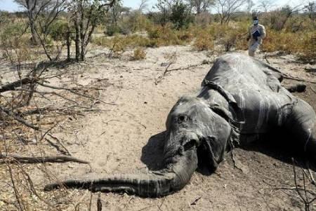 عکسهای جالب,عکسهای جذاب, فیل