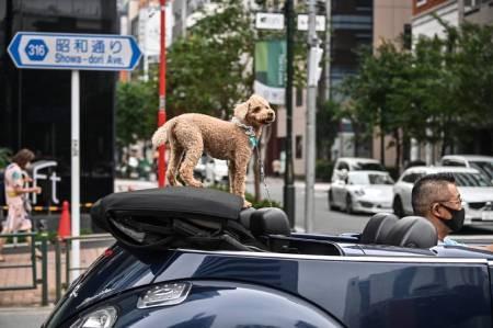 عکسهای جالب,عکسهای جذاب, سگ