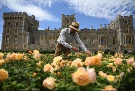 عکسهای جالب,عکسهای جذاب,قلعه وینسور