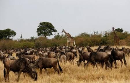 عکسهای جالب,عکسهای جذاب, پارک ملی