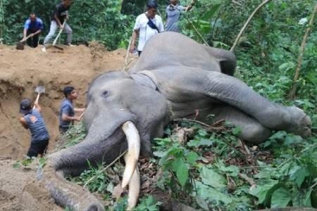 عکسهای جالب,عکسهای جذاب,فیل مُرده